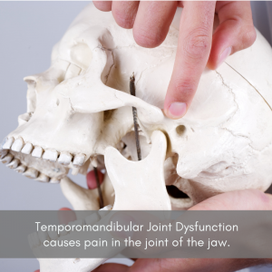 A skull with someone pointing to the TMJ (Temporomandibular Joint)